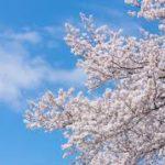 蹴上インクラインの桜の見頃は?例年の開花状況や駐車場情報を紹介!