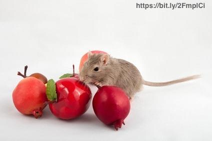 ハムスターにりんごをあげる時の注意点は?皮や種は大丈夫?量にも気を付けて!